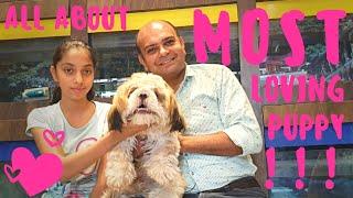 Shih Tzu Puppy Dog (Small Dog Breed) || Fun Loving breed || BAADAL BHANDAARI ||  9878474748 ||