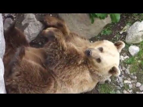 BEAR Korkeasaari Zoo - Helsinki Korkeasaari karhu