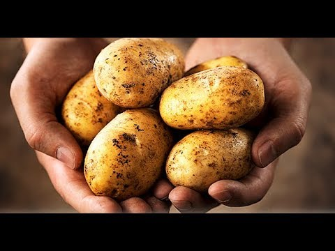 Сколько калорий в картошке?