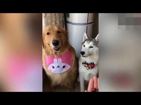 ANIMAIS MAIS FOFOS E ENGRAÇADOS DO MUNDO -  🐶 FUNNY ANIMALS: CÃES E GATOS 01