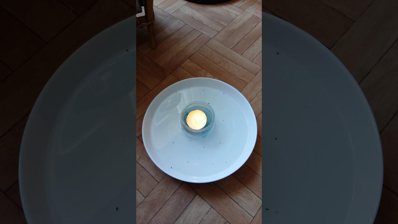 tuer des puces stunning sacslot haute efficace lit bug tueur poudre tuer les punaises de lit. Black Bedroom Furniture Sets. Home Design Ideas