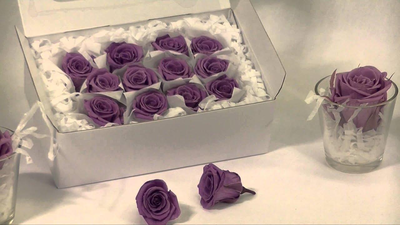 Come coltivare le rose: quando si piantano, come si curabo
