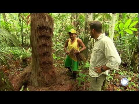 Equipe Do Câmera Record Visita Um Dos Piaçabais Mais Isolados Da Amazônia