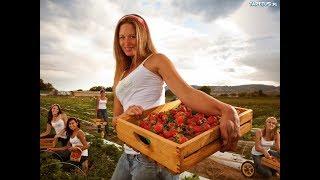 🍓 Maszyny rolnicze na plantacjach owoców i warzyw. 🚜