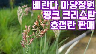 베란다화초 마당정원 야생화 다년생 노지월동식물 반려식물…