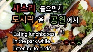 새소리 들음며 공원에서 먹는 도시락 정말 맛있고 힐링됩…