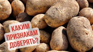 Когда копать картошку. Сроки уборки картофеля