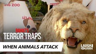 Mountain Lion Puppy-Caretaker Attack   Rahat's Terror Traps