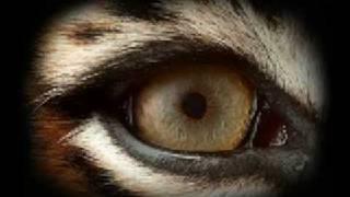 Survivor - Eye of the Tiger + lyrics music video