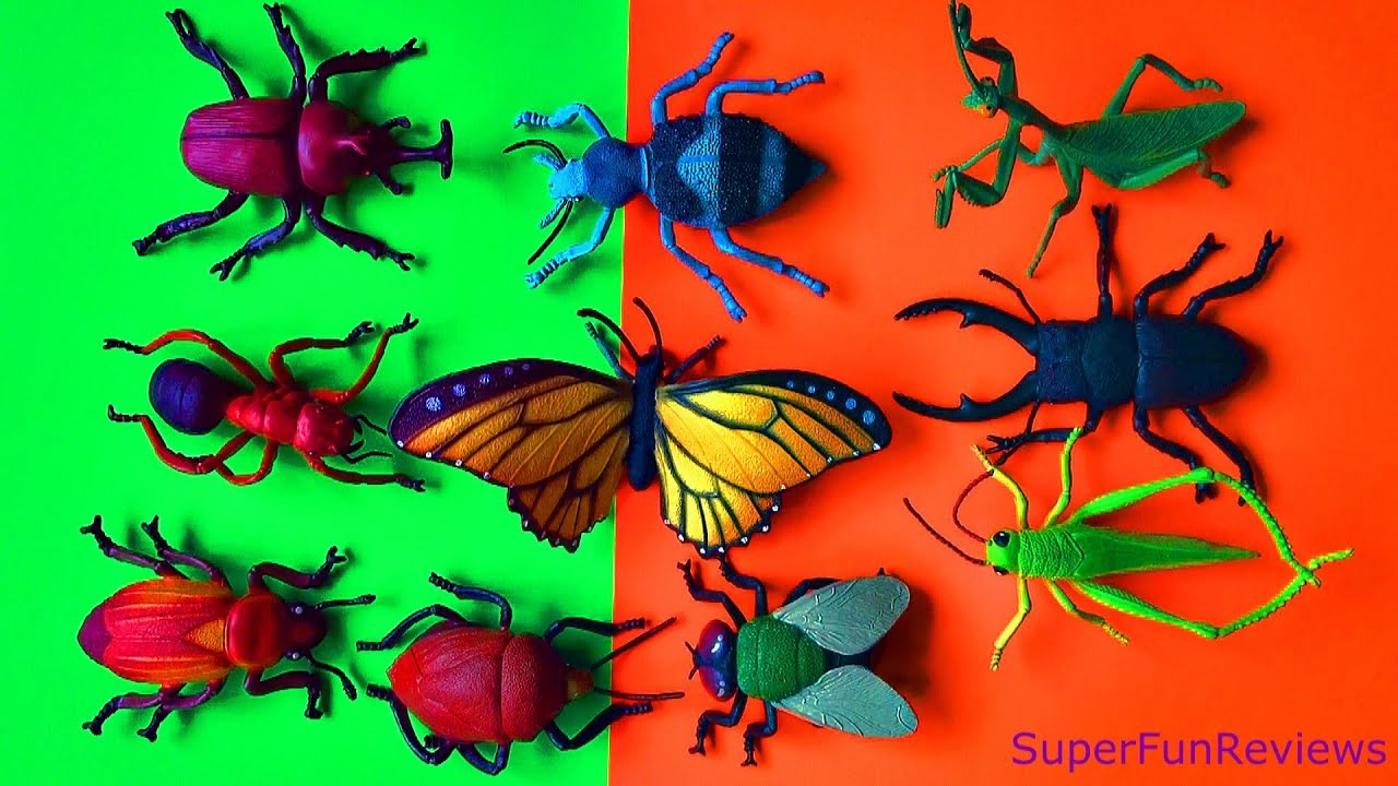 Rhino 3d Wallpaper Insect Collection Beetles Fly Grasshopper Scarab Rhino