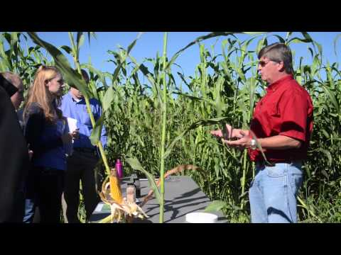 Biofuels from Sorghum