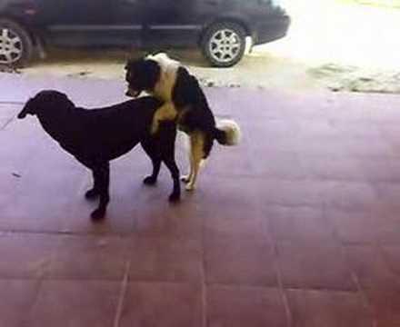 perro follando