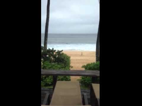 My view from my room in hawaii