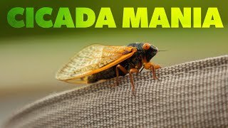 Cicada Mania - Fly Fishing Brood X (Only Every 17 Years)