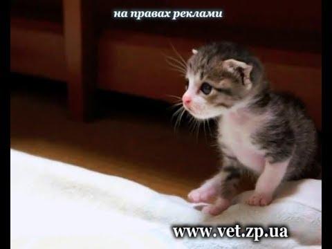 Что нужно знать, если вы завели котёнка