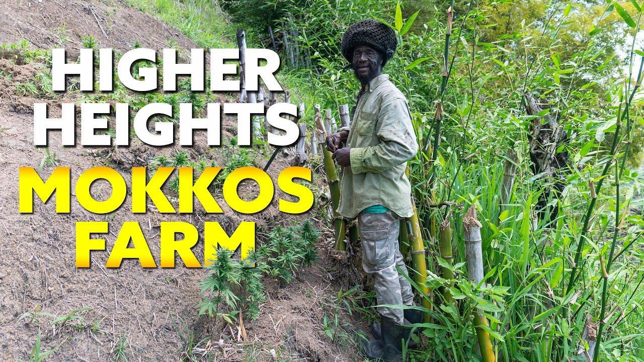 Mokkos Plans for Higher Hight's ! Part 2