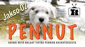 Koirat: Pennut - Uuteen kotiin - jakso 02