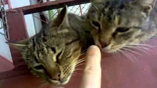 Смешные коты близнецы