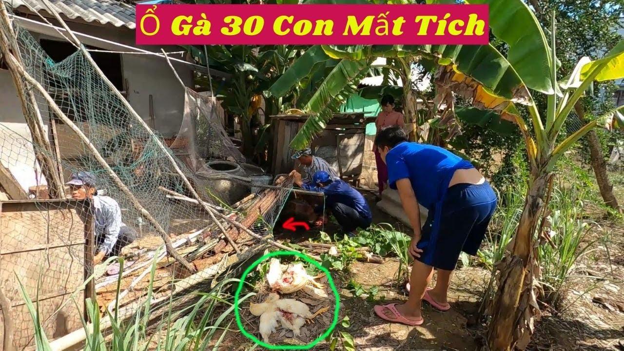 Ổ Gà 30 Con Bị Sát Hại & Mất Tích Chỉ Sau Một Đêm - Truy Tìm Thủ Phạm (Hunting Snakes)