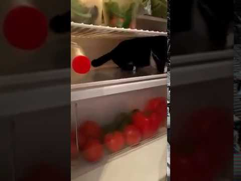 Kitten loves fridge