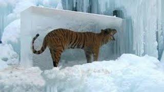10 ANIMALS FOUND FROZEN IN ICE