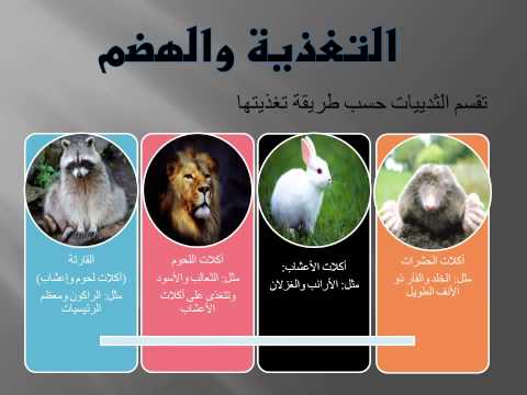الفصل الثالث : الثدييات. الدرس الأول : خصائص الثدييات