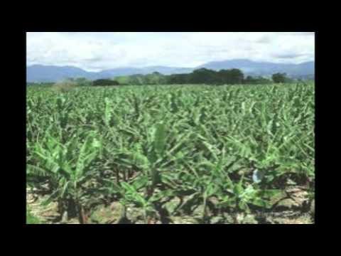 Utilizing Drones to Modernize Agriculture in Rwanda