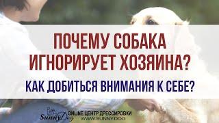 Почему собака игнорирует хозяина на улице? Как добиться внимания от собаки или щенка?