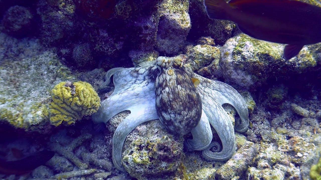 Bonaire scuba diving 4k sony ax100 youtube - 4k wallpaper download ...