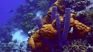 Bonaire scuba diving  4K sony AX100