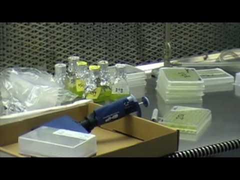 Carnegie Summer Internship Program in Plant Biology