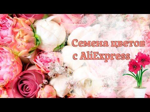 Обзор посылки с семенами цветов с Aliexpress.