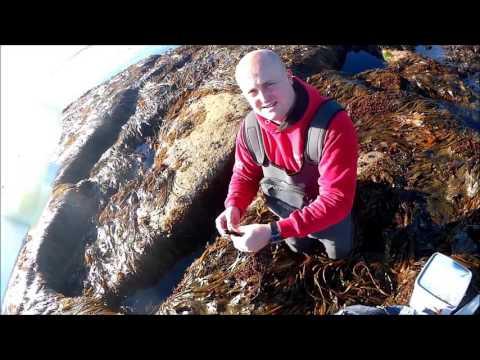 Northeast Cod Fishing 2016