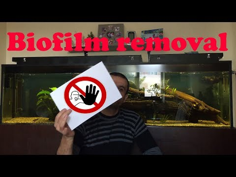 How To Remove Aquarium Biofilm With A Paper Sheet