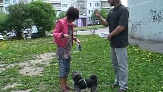 Канал ОТС про беспричинный лай на прохожих(Рекомендации по отучению собаки подбирать с земли остатки пищи и т.д., 2011-06-11T14:36:30.000Z)