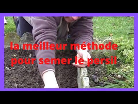 Que faire au jardin en fevrier semer du persil youtube - Comment semer du persil ...