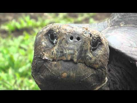 Ecuador Expedition 2015 - Study Abroad at USFQ Quito / Galapagos