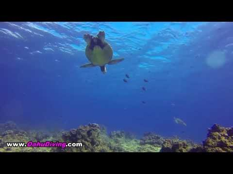 Turtle Canyons Waikiki Scuba Diving Location    Oahu Diving