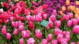 Цветы Голландии- аж дух захватывает! Wunderschön!!!(Закрытый павильон парка Кокенхоф в Голландии.Собраны растения периода цветения с апреля по июнь.Сказочное..., 2014-09-18T19:26:03.000Z)