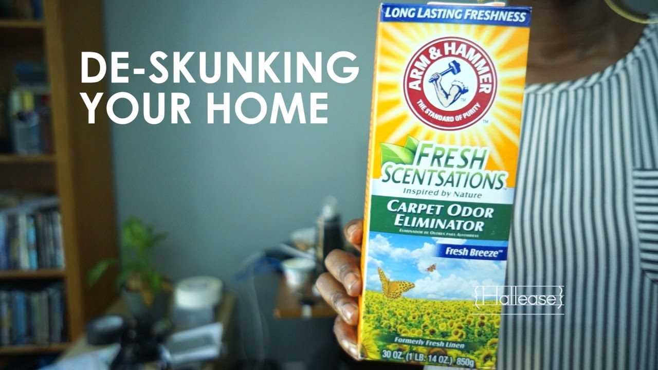 How To Remove Skunk Smell From Your Home : how-to-remove-odors-from-home - designwebi.com