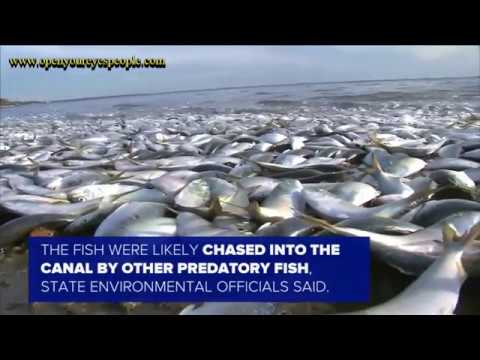 Tens Of Thousands Of Dead Fish Turn Up In New York Bay, State Officials Launch Investigation
