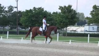 DonnerFeld: 2005 Hanoverian Gelding | 76.8% at Training Level Test 4