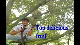 Top Delicious Fruits in Asia / Durian Fruit Eating Khmer / Fruit High Vitamin is Durian Fruit