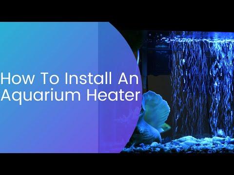 How To Install A Aquarium Heater Plus Regulate It