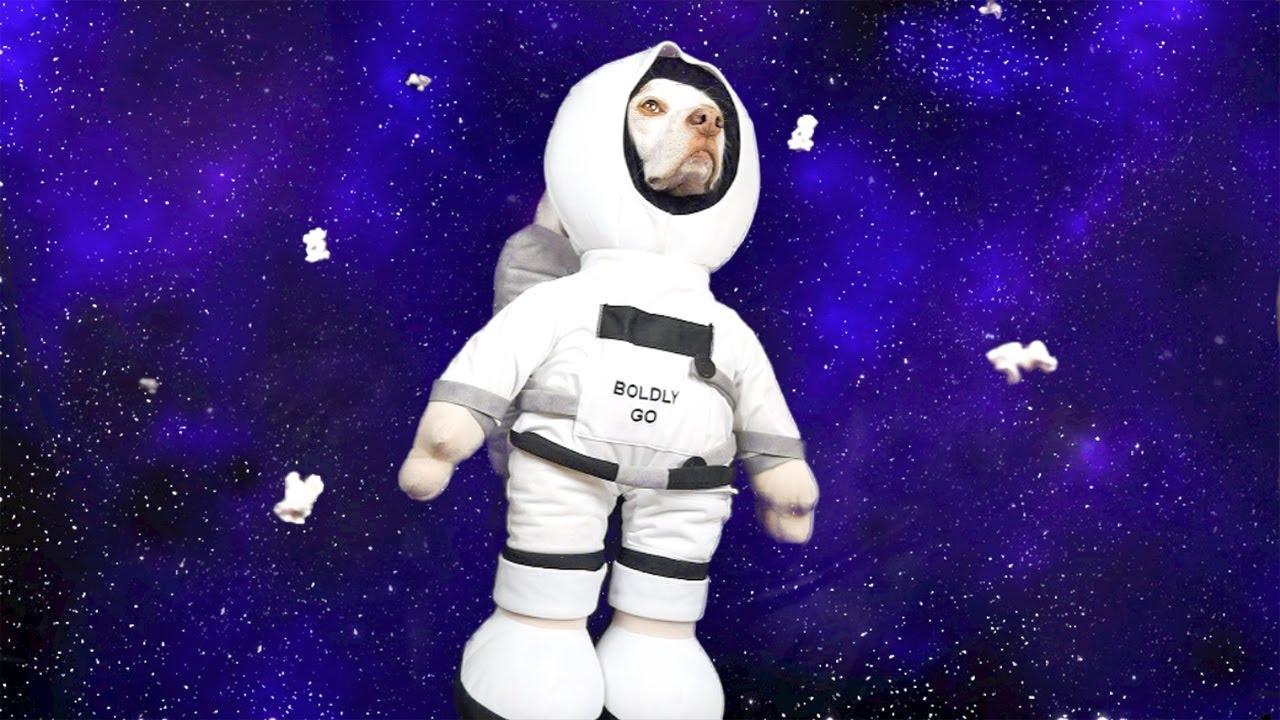 Dog Eats Popcorn in Space: Funny Dog Maymo - YouTube