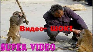 Нападение животных на людей! Видео  ШОК!