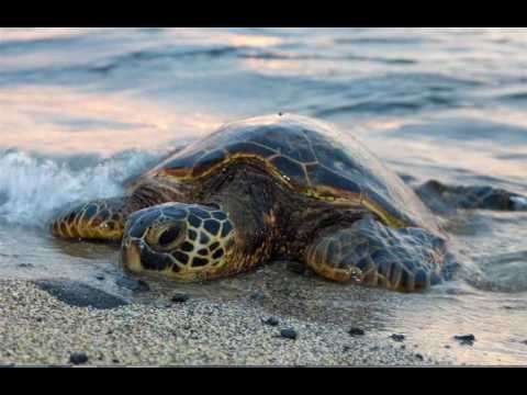 Earthcast SOS - Climate in Crisis Risks Sea Turtles