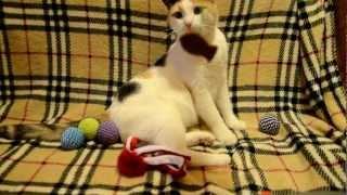 Москва.Кошка в добрые руки.Киска на счастье!