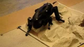 Usc Little Dog Robot