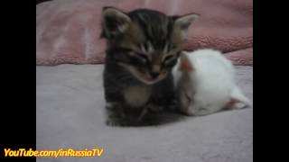 Very funny cute kittens compilation